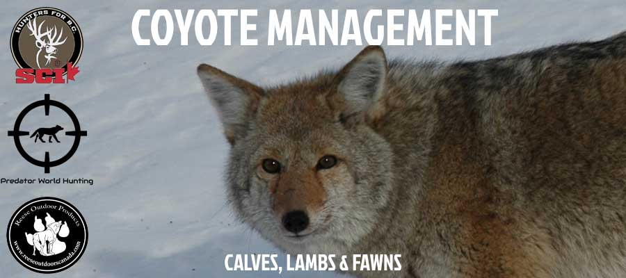 coyote management webinar hunters for bc