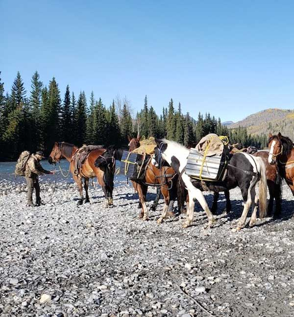 HUNTING WITH HORSES BRITISH COLUMBIA