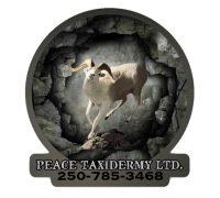 peace taxidermy ltd logo