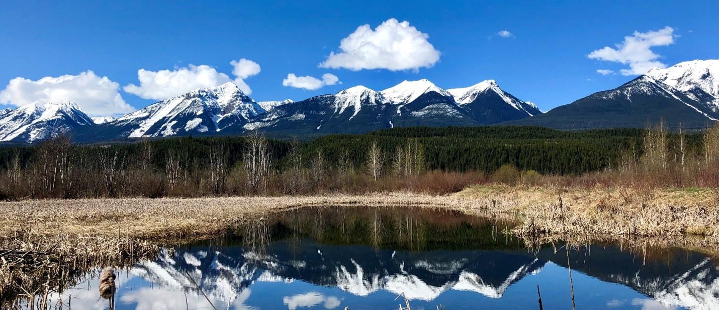 Moberly Marsh British Columbia Alana Higginson