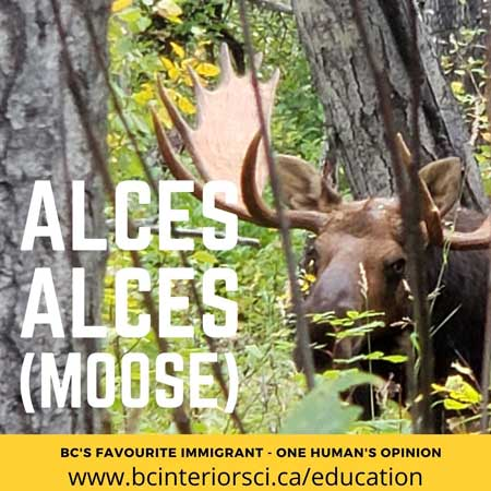 moose article series hunters for bc sci